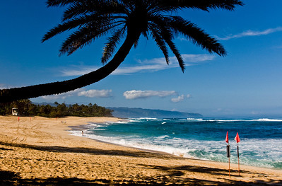 Sunset Beach Coconut Palm Tree, Morning at Sunset Beach North Shore of O'ahu