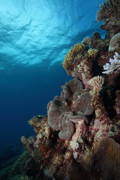 Colors of the Great Barrier Reef