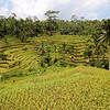 Rice terraces near Ubud, Bali