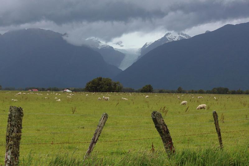 Sheep Under the Glacier