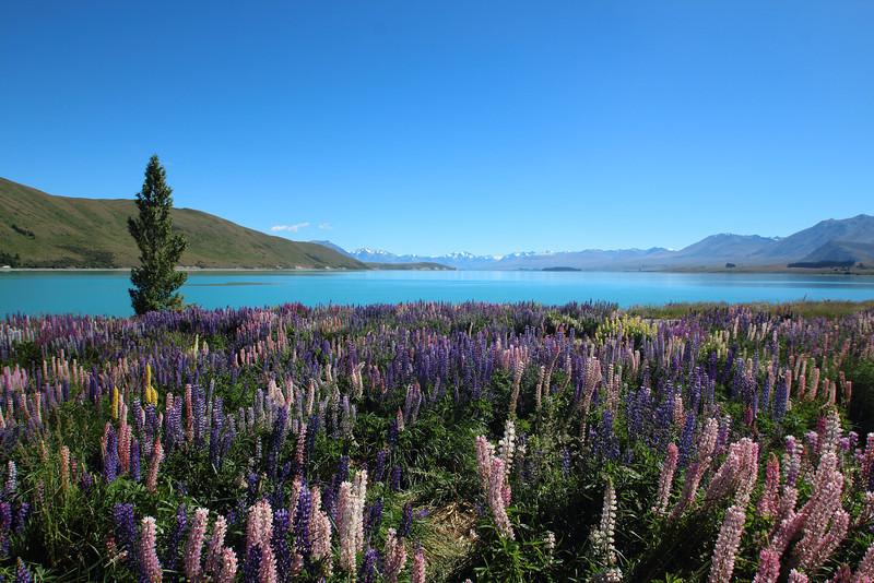 Lake Takupo