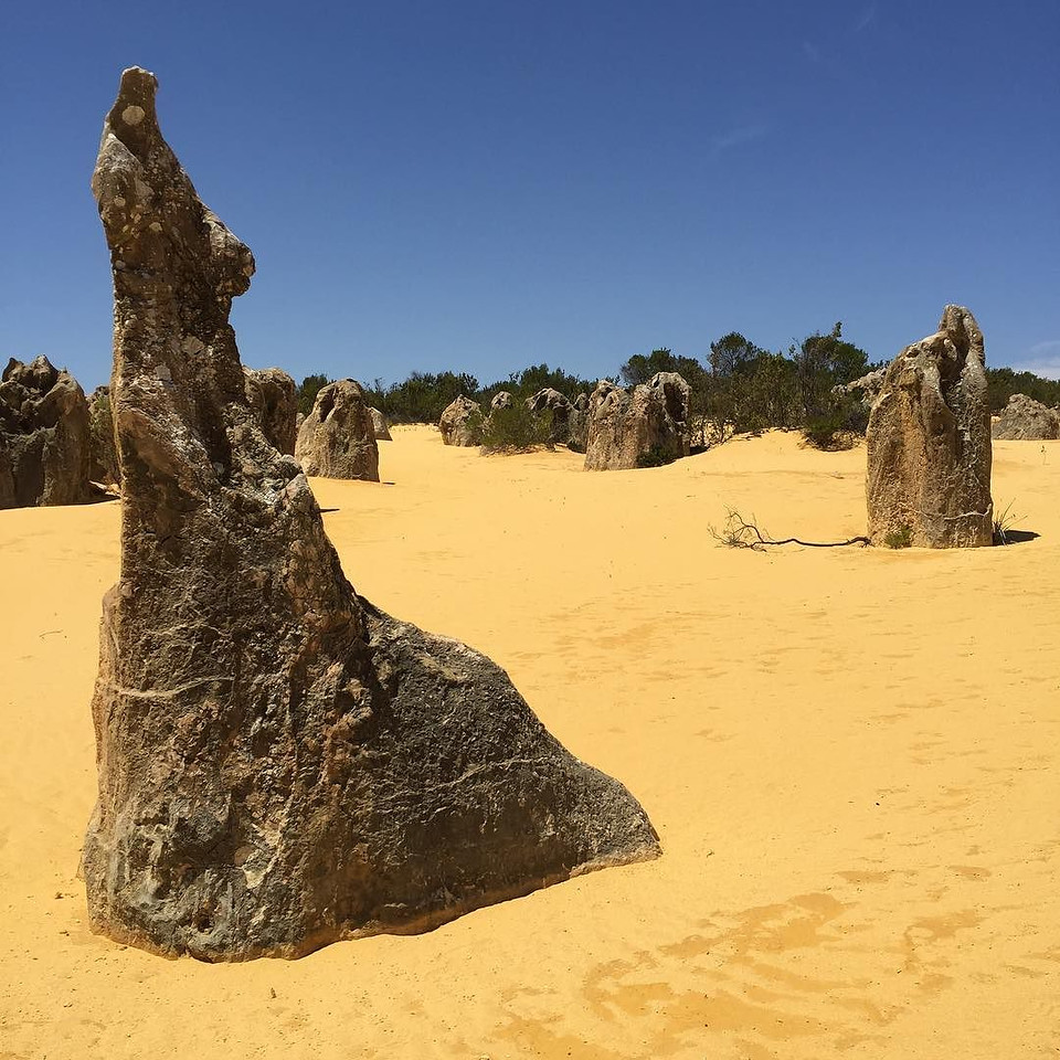 """The Pinnacles of Western Australia. Like staring at a Dali painting. Mysterious limestone formations. Speculation runs between """"remnants of ancient petrified vegetation"""" and """"an over abundance of nutrients delivered to plant root systems at the surface."""" This is to say, we don't know. To not know is OK. And this happens a lot in this part of the world, once part of Gondwana, an even greater ancient continent that included modern day Africa and Antarctica. via Instagram http://ift.tt/1Wn5tMv"""
