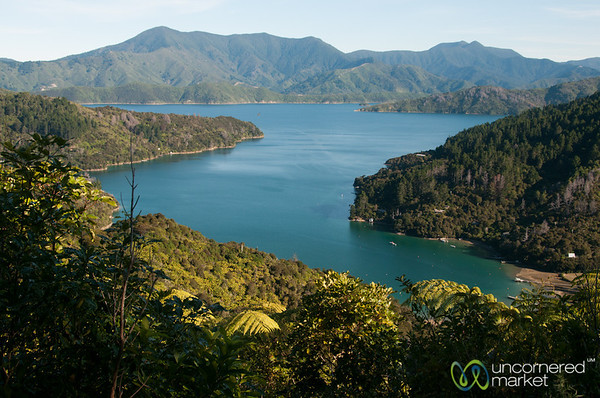 Queen Charlotte Sound Views - New Zealand - New Zealand