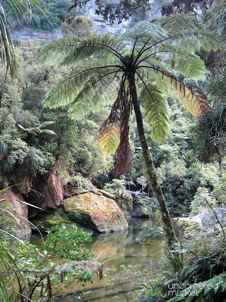 New Zealand Rainforest Near Punaikaiki - South Island