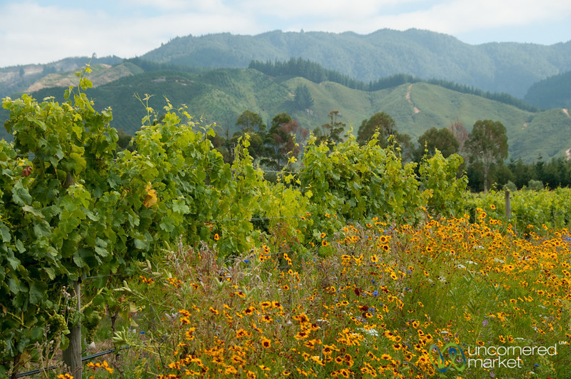 Wild Flowers and Vineyards - Hans Herzog Estate Winery, New Zealand