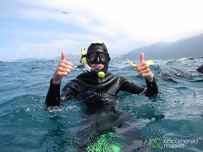 Dan Swimming with Dophins - Kaikoura, New Zealand