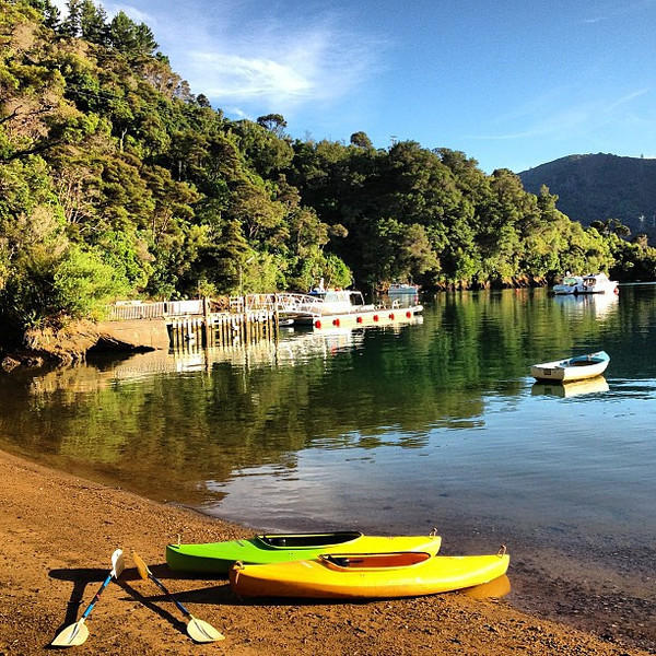 I think it's time to find some seals and shags. Our early morning sea kayak @Lochmara Bay #newzealand