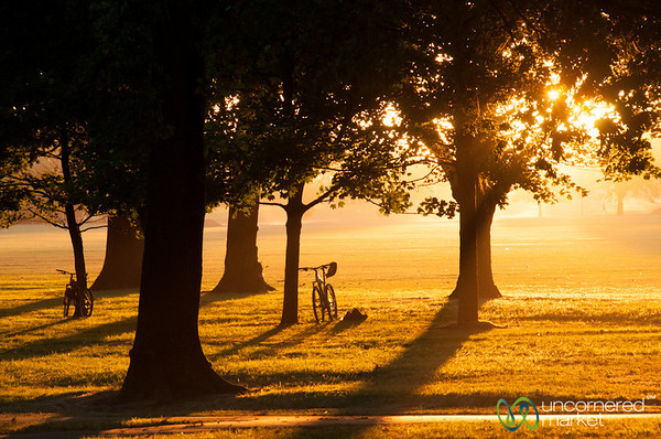 Sunset in the Park - Christchurch, New Zealand