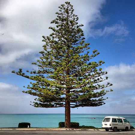 A finely placed tree, Kaikoura Esplanade. I pretty much have a love affair with all the trees in New Zealand.