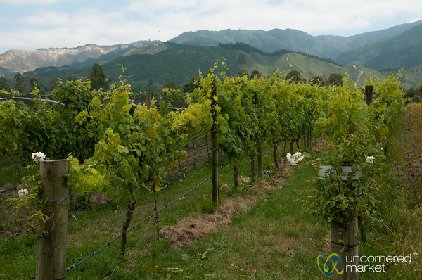 Vineyards at Hans Herzog Winery - New Zealand