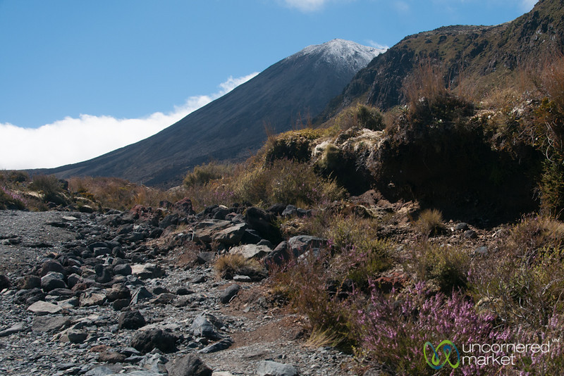 Flowers and Mountains - Tongariro National Park, New Zealand