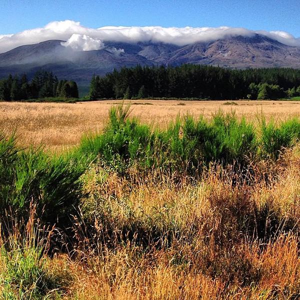 Mount Tongariro: Lining up for today's Waitangi Day hike of the Tongariro Crossing #newzealand