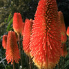 Flowers in Melbourne Royal Botanical Gardens