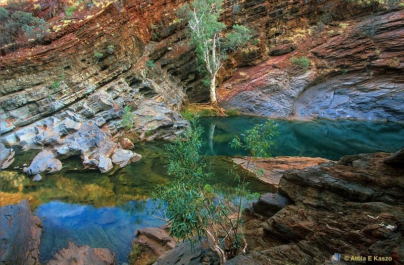Rock Pool<br /> Hamersley Gorge, Karijini NP, WA