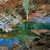 Rock Pool<br /> Hamersley Gorge, Karijini NP, WA