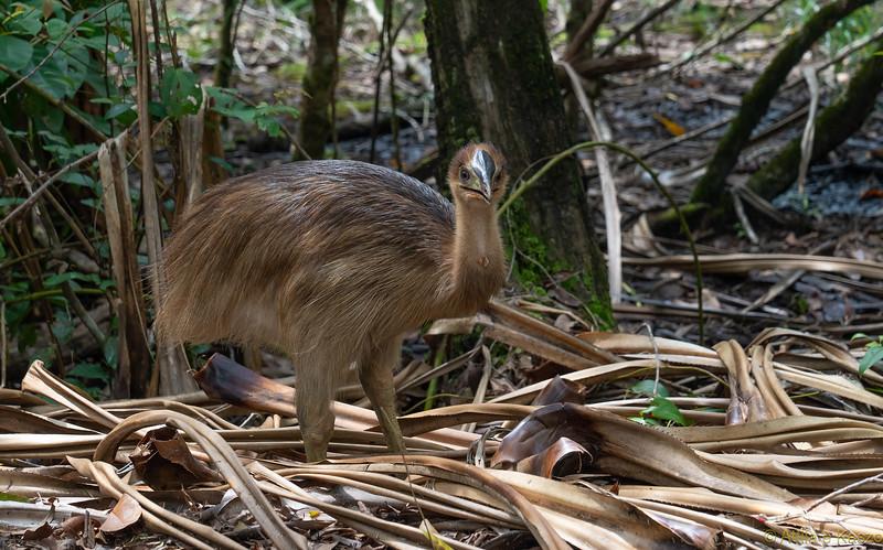 Fauna Native