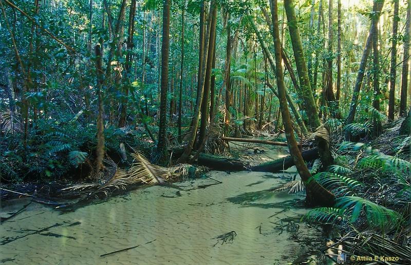 Wanggoolba Creek - Fraser Island, Qld
