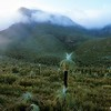 Bluff Knoll<br /> Stirling Ranges NP, WA