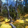 Alpine Moor - Pine Valley<br /> Cradle Mtn. NP, Tasmania
