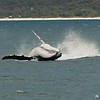 Humpback Whale (Megaptera navaeangliae) Jervis Bay, Shoalhaven, NSW