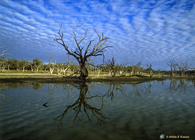 Cawndilla Creek - Sunrise<br /> Kinchega NP, NSW<br /> 600-3-468