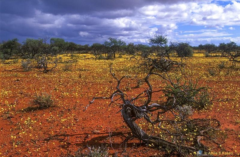 Desert Flora<br /> Shark Bay, WA