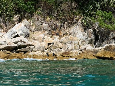 Baby seals in Abel Tasman National Park