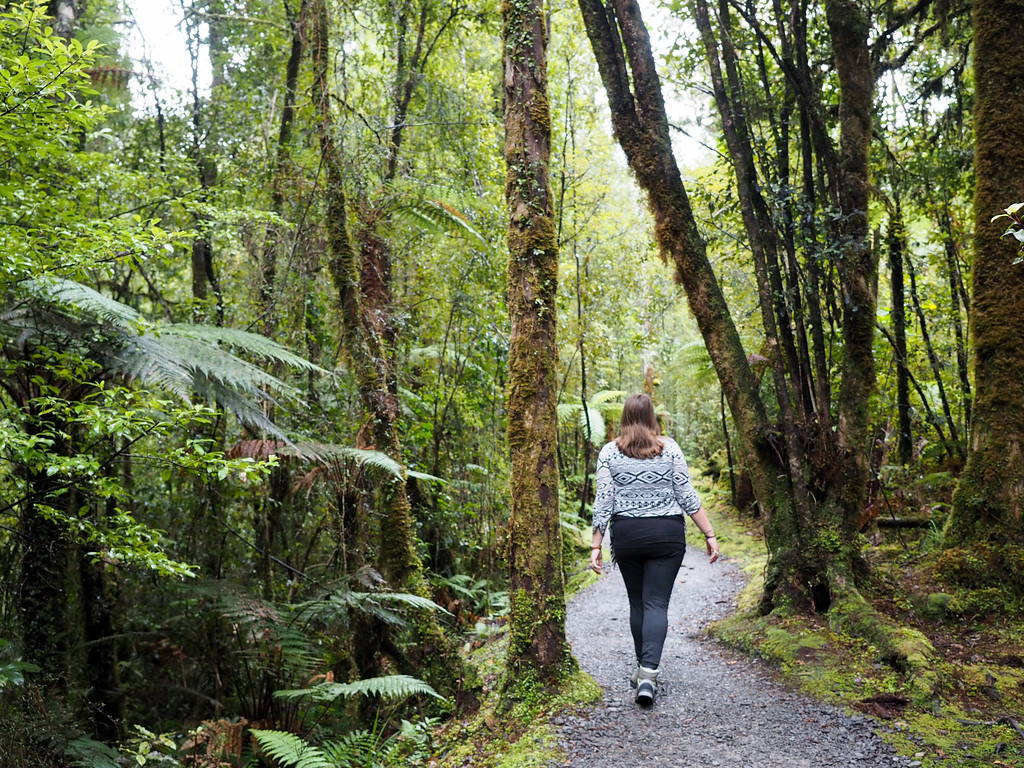 Walking through the New Zealand Forest