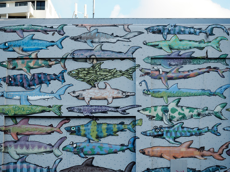 Shark mural in Wellington, New Zealand