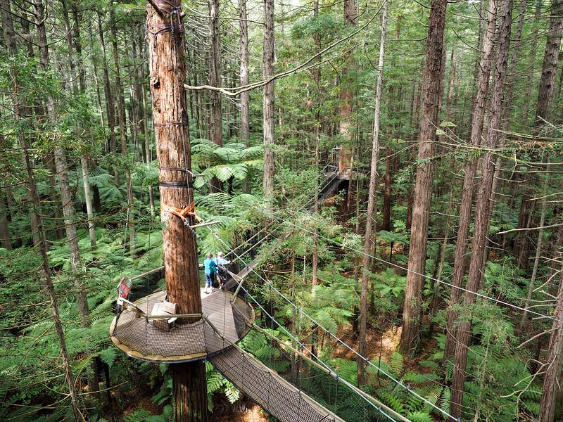 Redwoods Treewalk in Rotorua