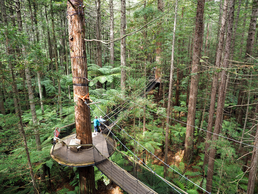Redwoods Tree Walk in Rotorua