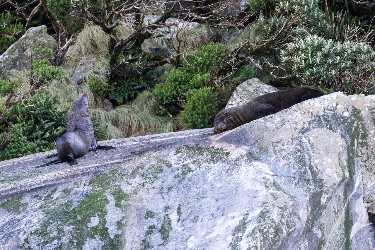 Seals relaxing on the rocks.