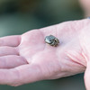 A tiny crab at Boulder Bank.