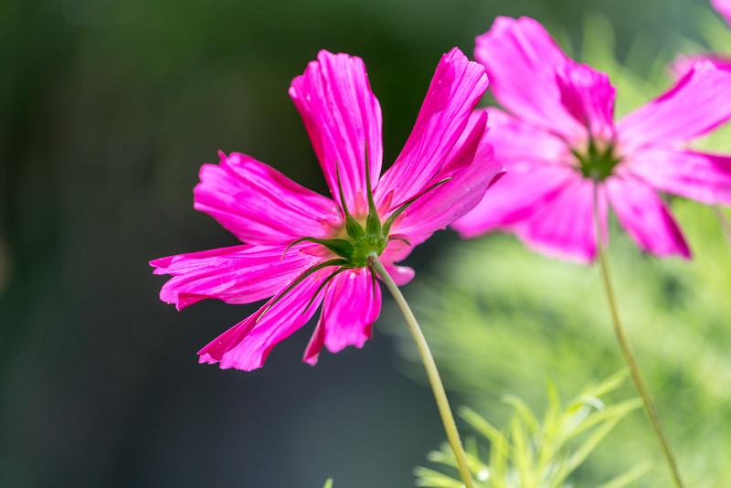 Flowers in a Nelson garden.