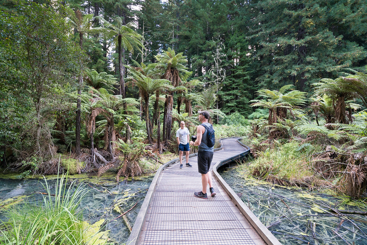 A walkway over thermal springs winding through a fern forest. Very New Zealand!