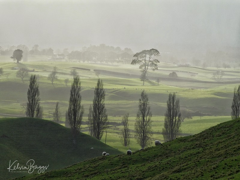 Rotorua - Bay of Plenty: foggy morning