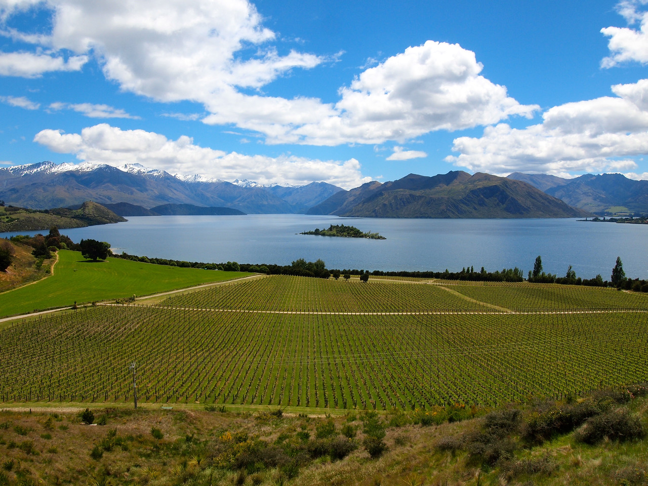 Rippon Vineyard in Wanaka, New Zealand