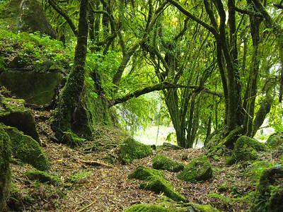 Piopio, New Zealand