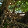Vegetation - Eua Is., Tonga