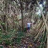 Marg, Pandanas Forest - Eua Is., Tonga