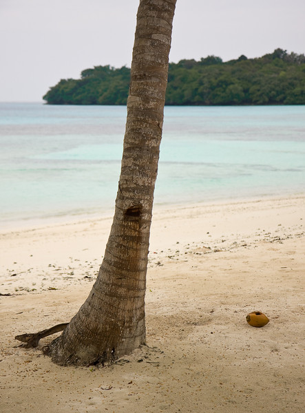 Coconut and palm.<br /> <br /> Location: Santo island, Vanuatu<br /> <br /> Lens used: 17-55mm f2.8 IS