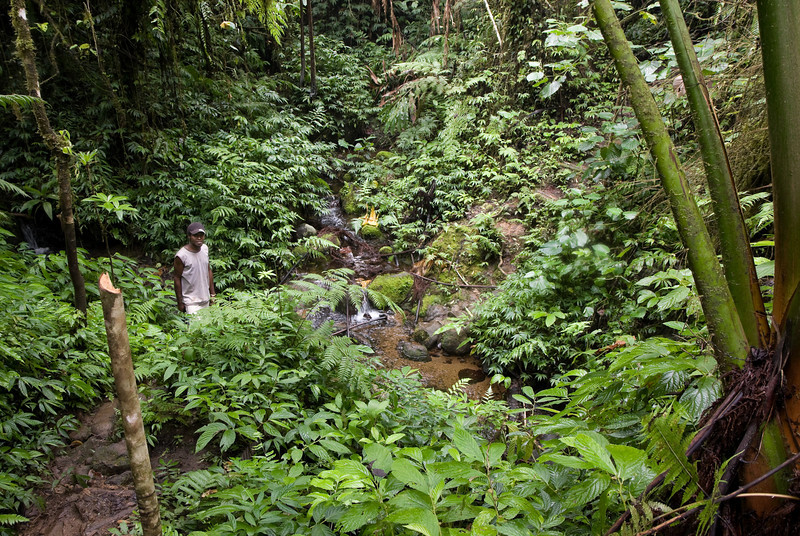 Hiking through the jungle en route to the Millennium cave.<br /> <br /> Location: Santo island, Vanuatu<br /> <br /> Lens used: 17-55mm f2.8 IS