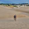 oceano dunes dog 5829