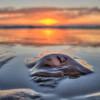 oceano sunset jellyfish 6510