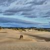 oceano dunes 5827