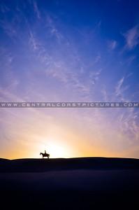 horse-dunes-7947