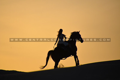 horse-dunes-8011