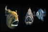 Fish & Ships 014