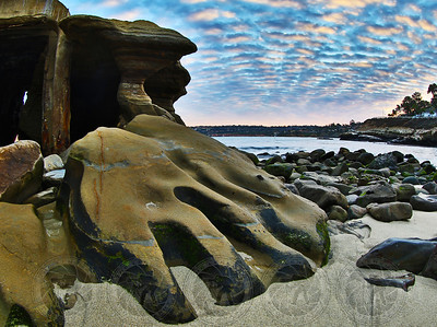 """Bear Claw"" La Jolla Cove, Ca"
