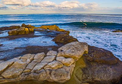 Surfing Seal La Jolla Cove, Ca